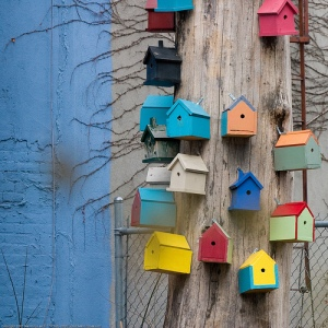 Bird Houses by See-ming Lee