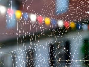 Web by barockschloss